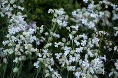 Flora av ukrainareCarpathians berg Royaltyfri Bild