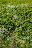 Flora av ukrainareCarpathians berg Arkivbilder