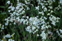 Flora av ukrainareCarpathians berg Royaltyfria Bilder