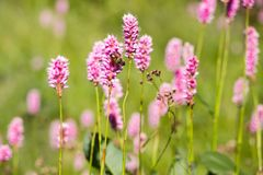 Flora av ukrainareCarpathians berg Royaltyfri Fotografi
