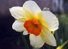 Flora Royalty Free Stock Photos