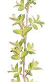 Flora bella della sorgente Fotografia Stock Libera da Diritti