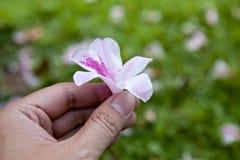 Flora blanca en la mano Imagenes de archivo