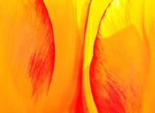 Flora, bloemtextuur Stock Fotografie