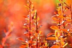 Flora Bokah rossa Fotografie Stock