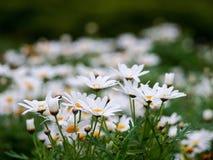 Flora bonita no jardim Fotografia de Stock Royalty Free