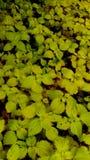 Flora brilhante foto de stock royalty free