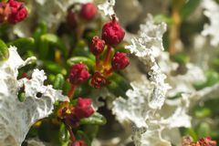 flora brilhante e diversa foto de stock
