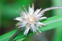 Flora Button Abstract Stock Photo