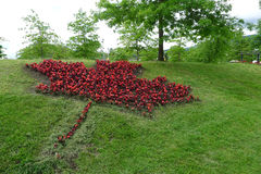 Flora Canada Maple Leave Made från röd begonia Royaltyfria Foton