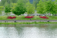Flora Canada Maple Leaves Made da begônia vermelha Fotografia de Stock Royalty Free