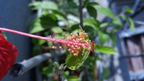 flora immagine stock libera da diritti