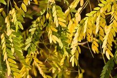 Flora colorida del otoño Imágenes de archivo libres de regalías