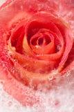 Flora congelada Imágenes de archivo libres de regalías