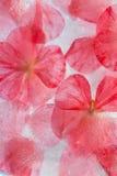 Flora congelada Imagen de archivo libre de regalías