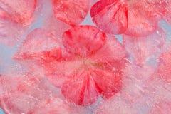 Flora congelada Fotografía de archivo