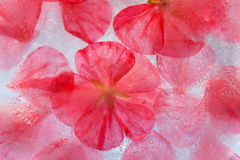 Flora congelada Foto de archivo libre de regalías