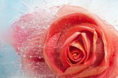 Flora congelada Foto de archivo