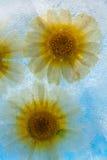 Flora congelada Fotografía de archivo libre de regalías