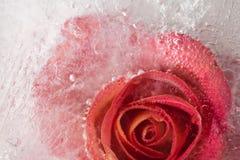 Flora congelata Fotografie Stock Libere da Diritti