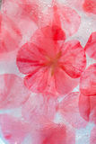 Flora congelata Immagini Stock