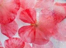 Flora congelata Immagine Stock Libera da Diritti