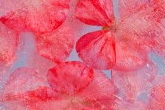 Flora congelata Fotografia Stock Libera da Diritti
