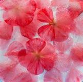 Flora congelata Fotografia Stock