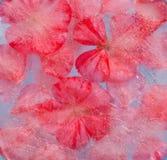 Flora congelata Immagine Stock