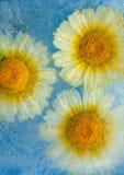 Flora congelata Immagini Stock Libere da Diritti