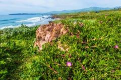 Flora costiera di California Immagini Stock