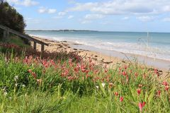 Flora costiera sulla riviera di una spiaggia australiana Fotografia Stock
