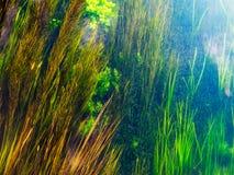 Flora da água fresca fotografia de stock