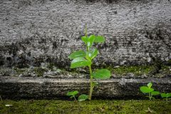 A flora da erva daninha foto de stock