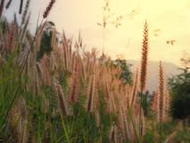 A flora da grama fotografia de stock royalty free