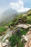 Flora da montanha dos fagaras fotos de stock