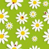 Flora Daisy Seamless Pattern Design Vector Photos stock