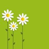 Flora Daisyl Design Vector Illustartion Arkivbilder