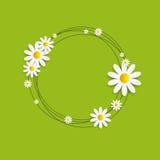 Flora Daisyl Design Vector Illustartion Fotografering för Bildbyråer