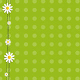 Flora Daisyl Design Vector Illustartion Royaltyfria Bilder