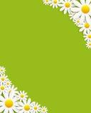 Flora Daisyl Design Vector Illustartion Arkivfoto