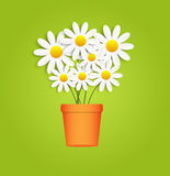 Flora Daisyl Design Vector Illustartion Royaltyfria Foton