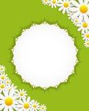 Flora Daisyl Design Vector Illustartion Royaltyfri Foto