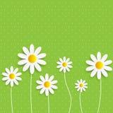 Flora Daisyl Design Vector Illustartion Royalty Free Stock Photography