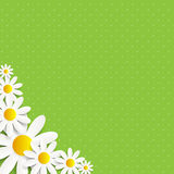 Flora Daisyl Design Vector Illustartion Royalty Free Stock Photo
