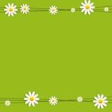 Flora Daisyl Design Vector Illustartion Royalty Free Stock Photos