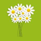 Flora Daisyl Design Vector Illustartion Royalty Free Stock Images