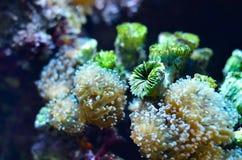 Flora de água doce tropical subaquática do aquário imagem de stock