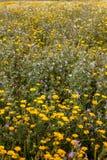 Flora de Algarve de la primavera Foto de archivo libre de regalías