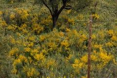 Flora de Algarve de la primavera Imagen de archivo libre de regalías